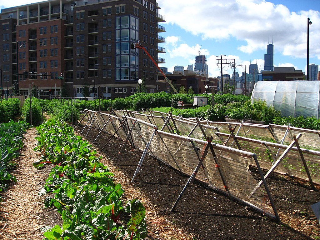 New crops urban farm in Chicago