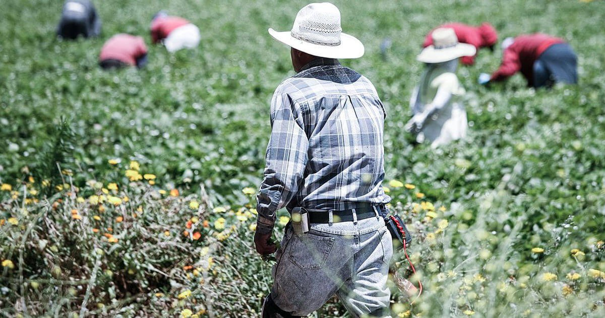 Food politics: Agriculture, Mexican farmworkers