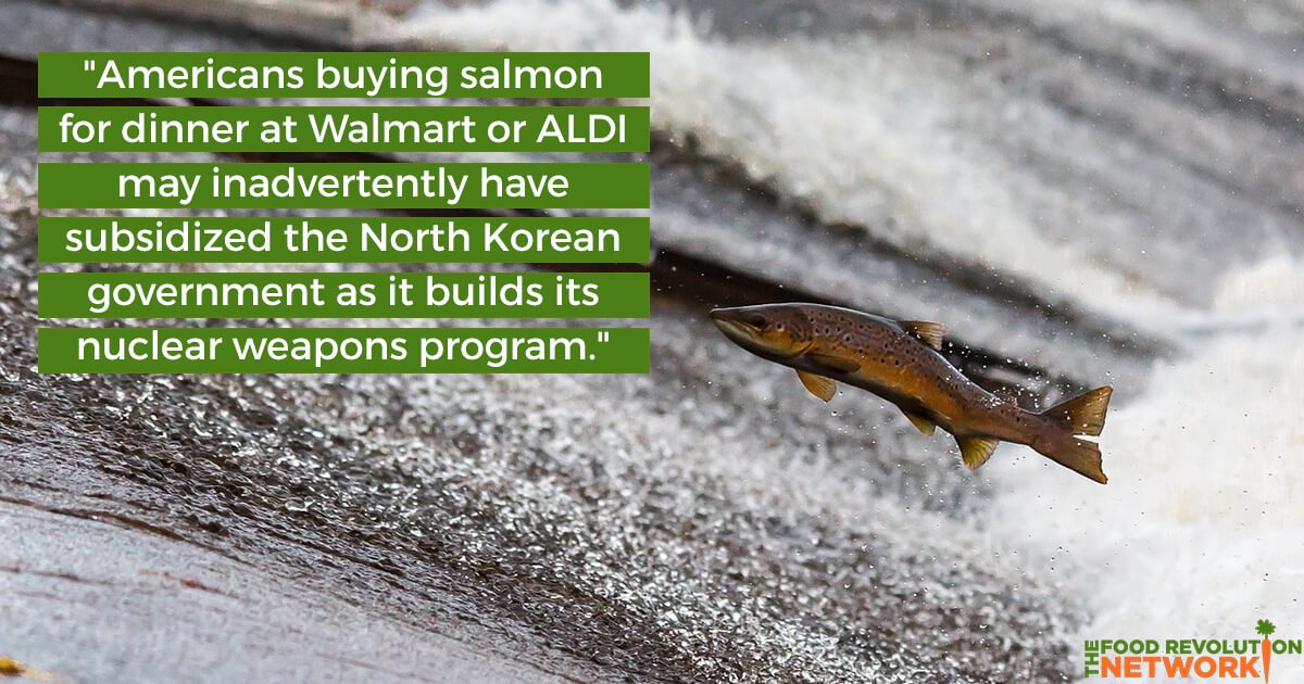 How American Seafood Is Subsidizing the North Korean Government and Supporting 'Modern Day Slavery'