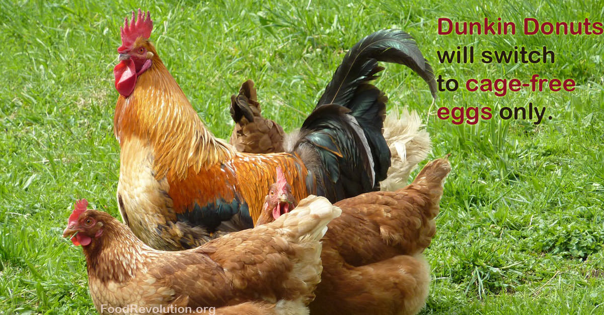 Cage-Free Eggs Dunkin Donuts