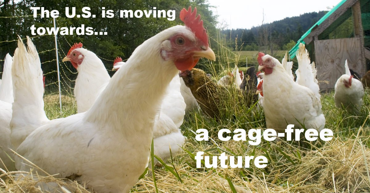 Cage-free future in the US