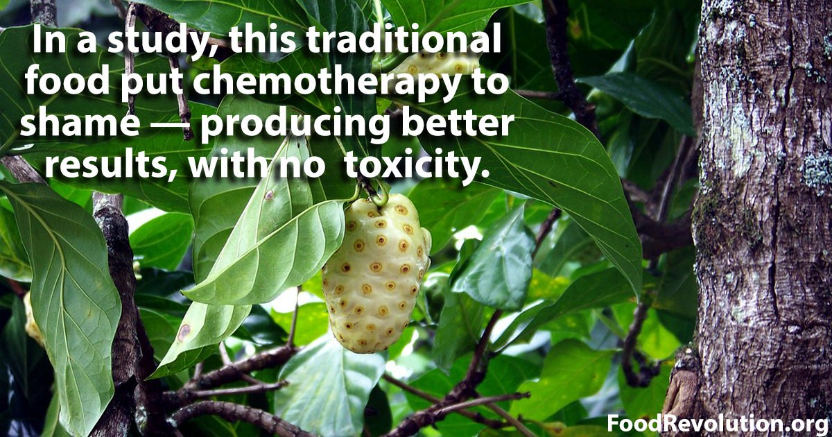 Cancer-fighting food noni leaf