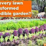 What If Every Lawn was Transformed into an Edible Garden?