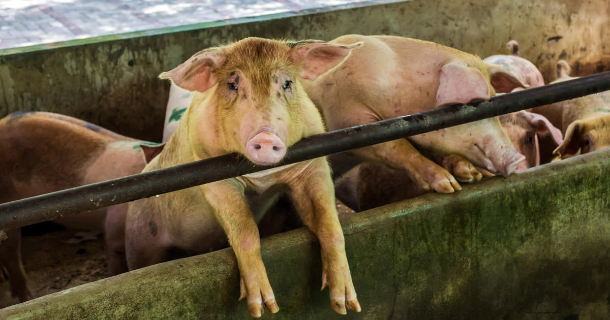 animal farms controlled environment Farm animals need our help environment waste from large-scale confinement farms learn what the aspca is doing to help farm animals and why this issue impacts.