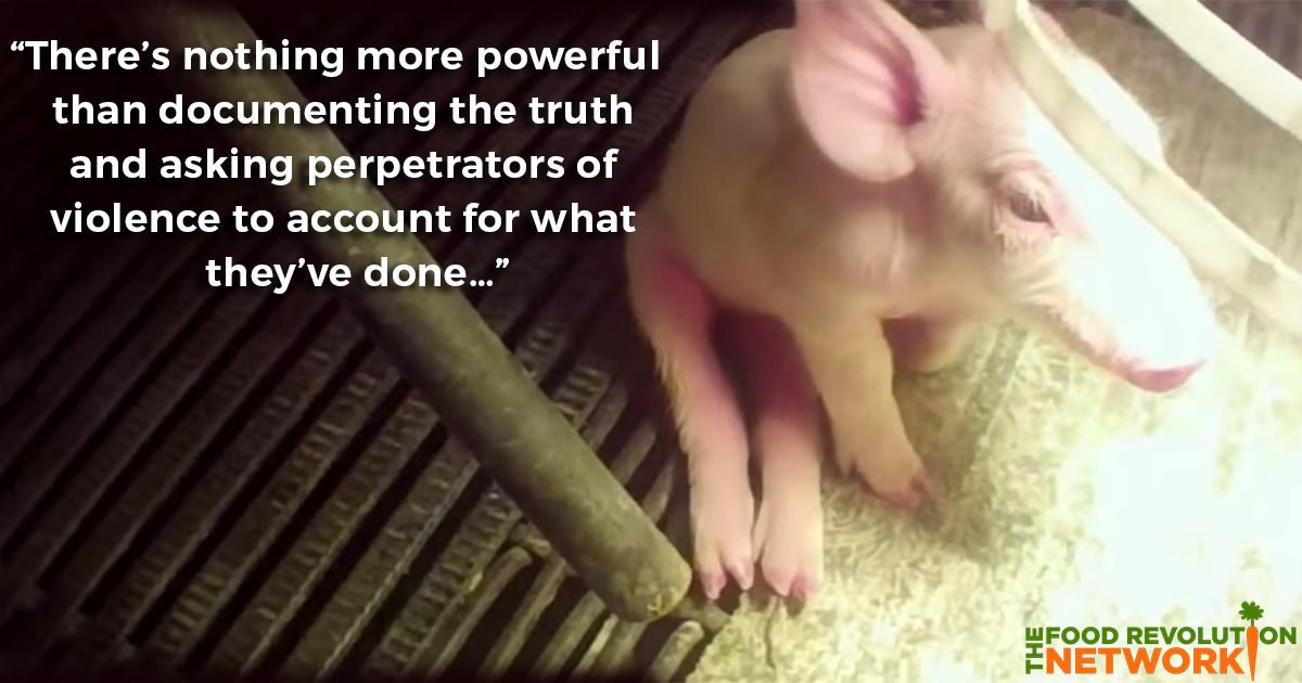[Video] The Truth About Factory Farms and Animal Abuse