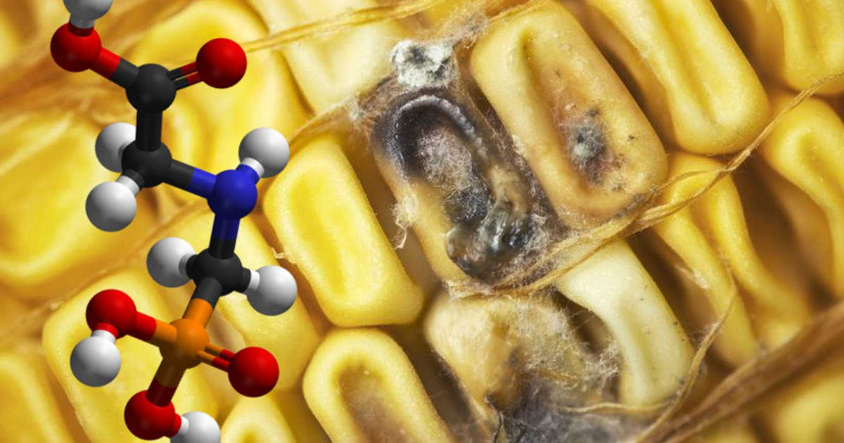 Why You Should Be Concerned About Monsanto's New Dangerous Food Technology RNAi Corn