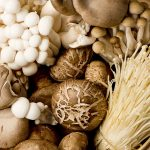 Mushrooms Have Surprising Power to Heal People and the Planet