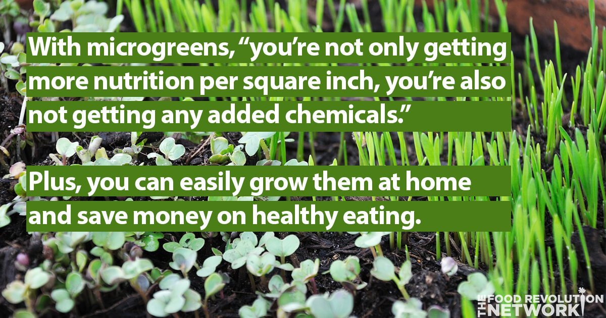 Healthy eating tips: Eating and growing microgreens