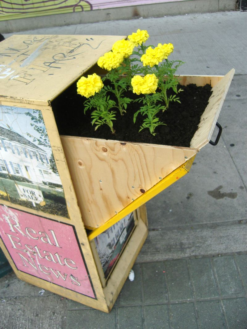Flowers in a newspaper stand