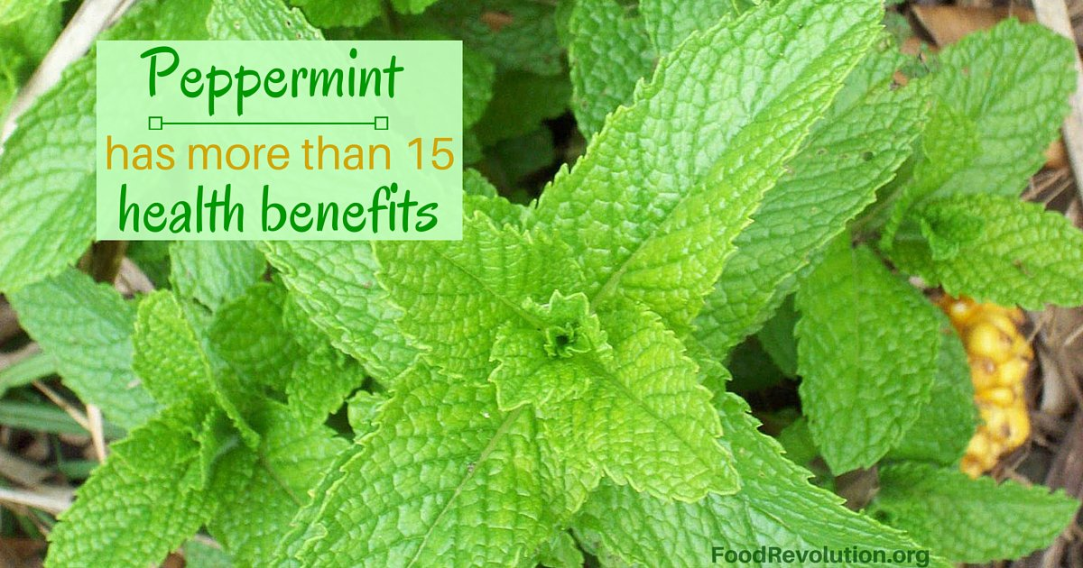 Peppermint health benefits