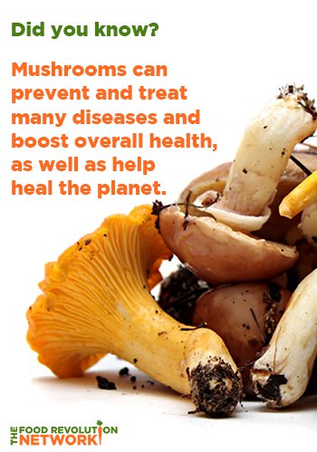 Mushroom-health-and healing-benefits-small