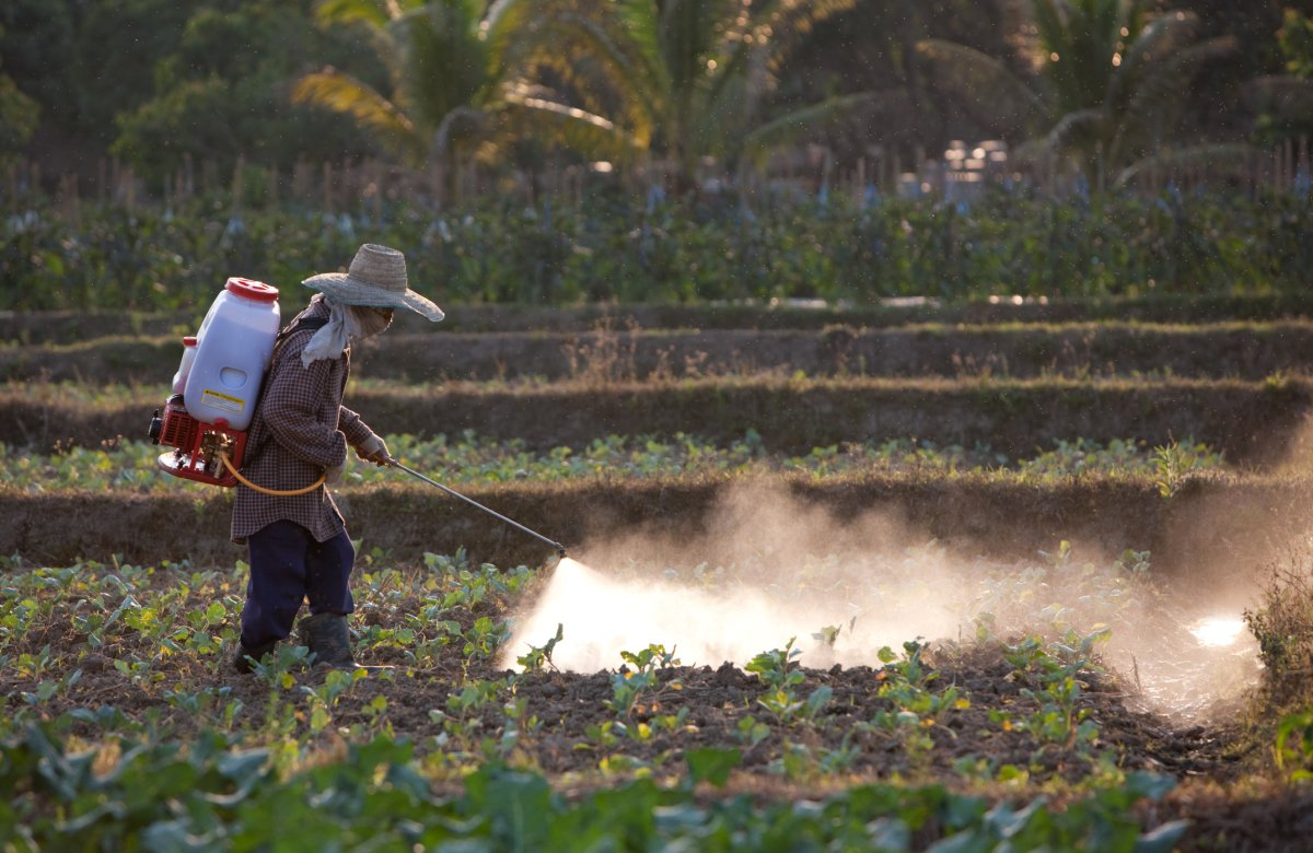 Hispanic man spraying a field with pesticides