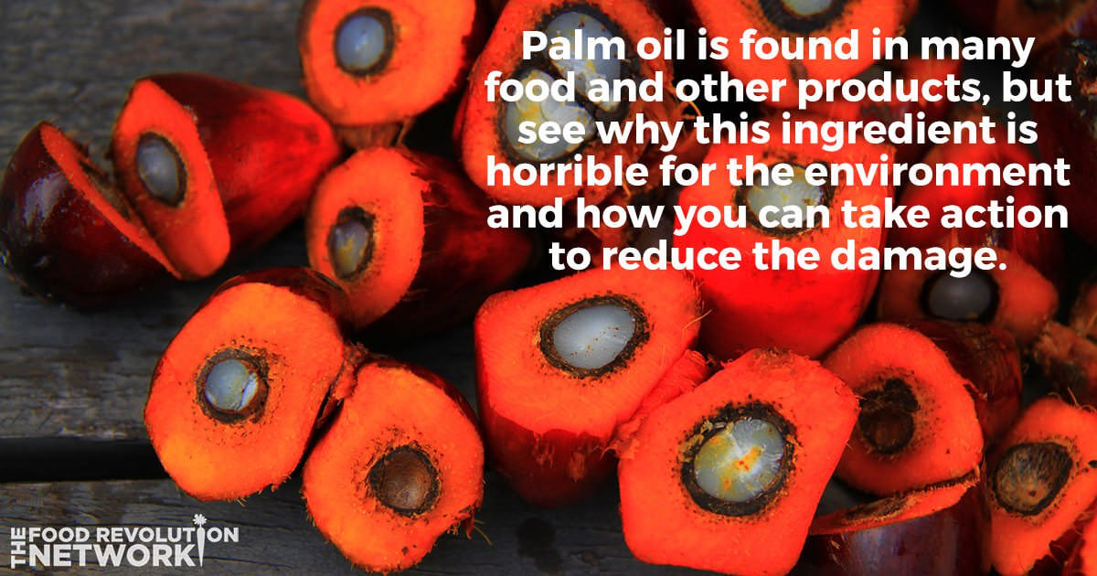 Palm oil is harmful for the environment