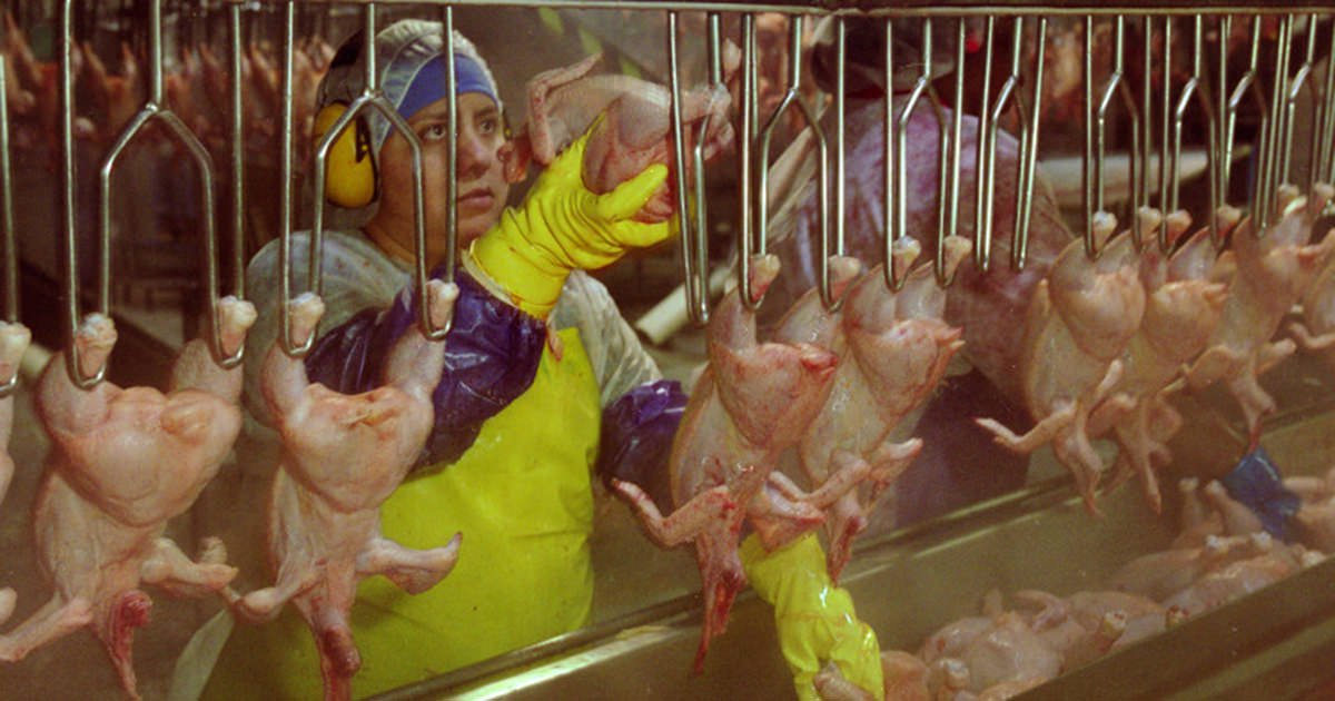 Poultry production