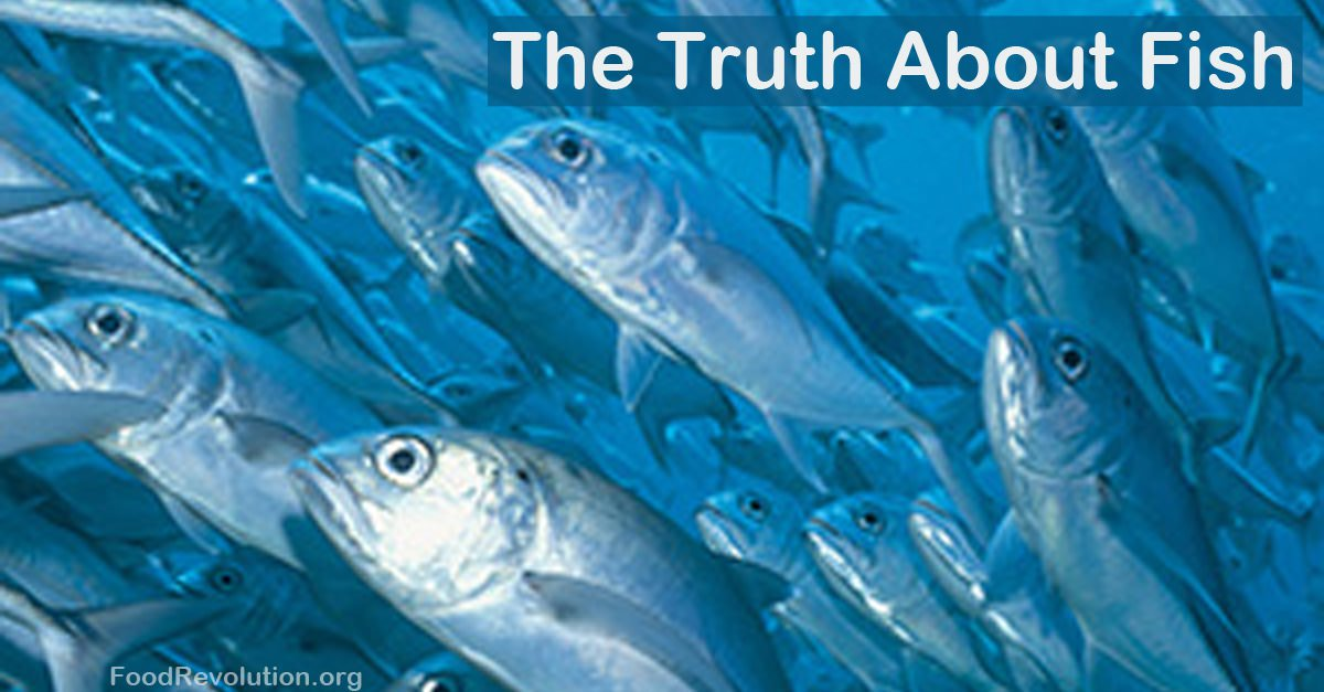 The Truth About Fish