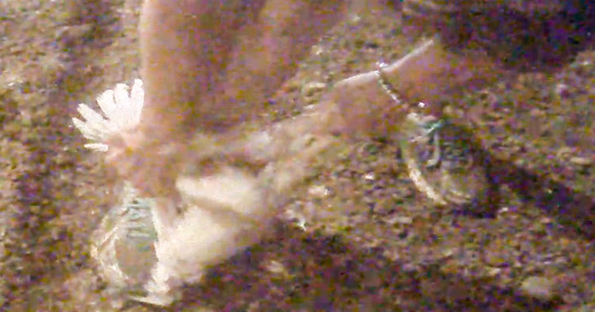 Tyson factory worker stepping on a chicken's head