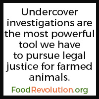 Undercover investigations factory farming quote