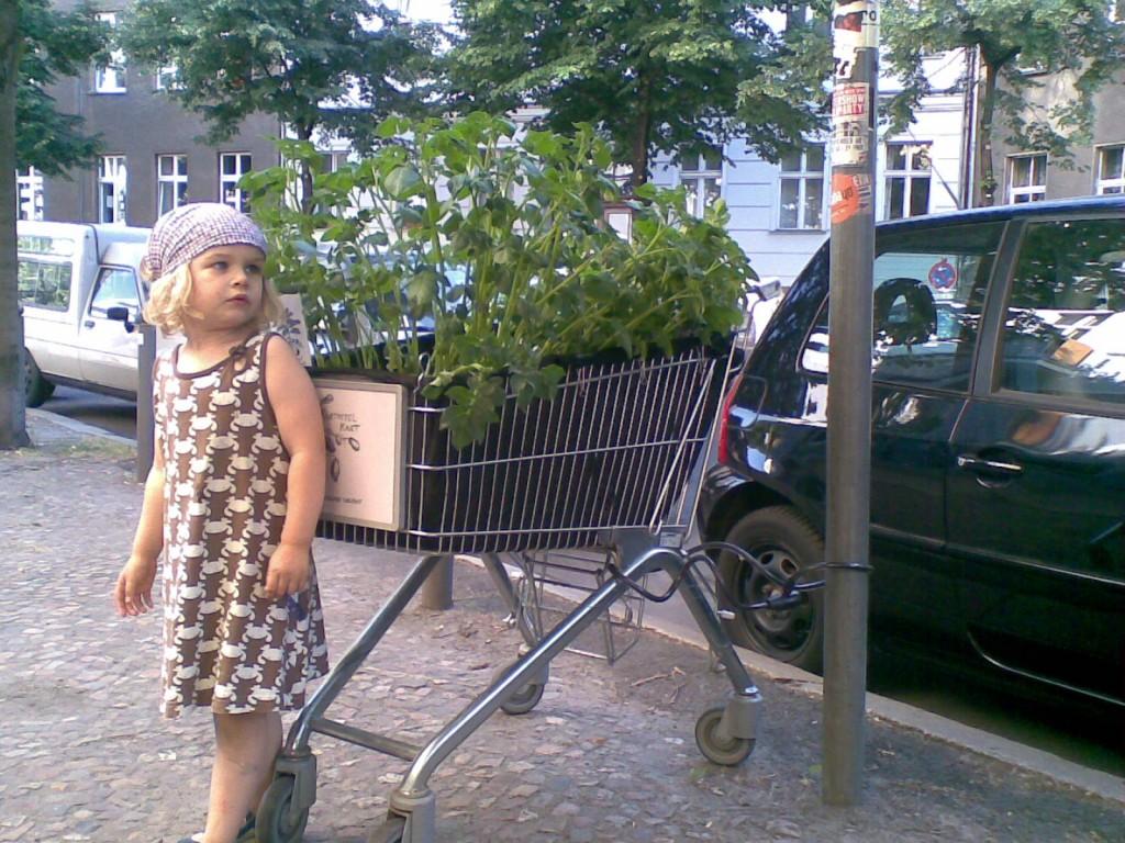 Grocery cart garden
