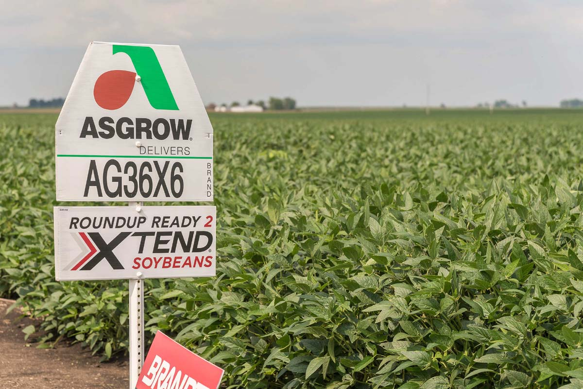 roundup ready soybeans and signage