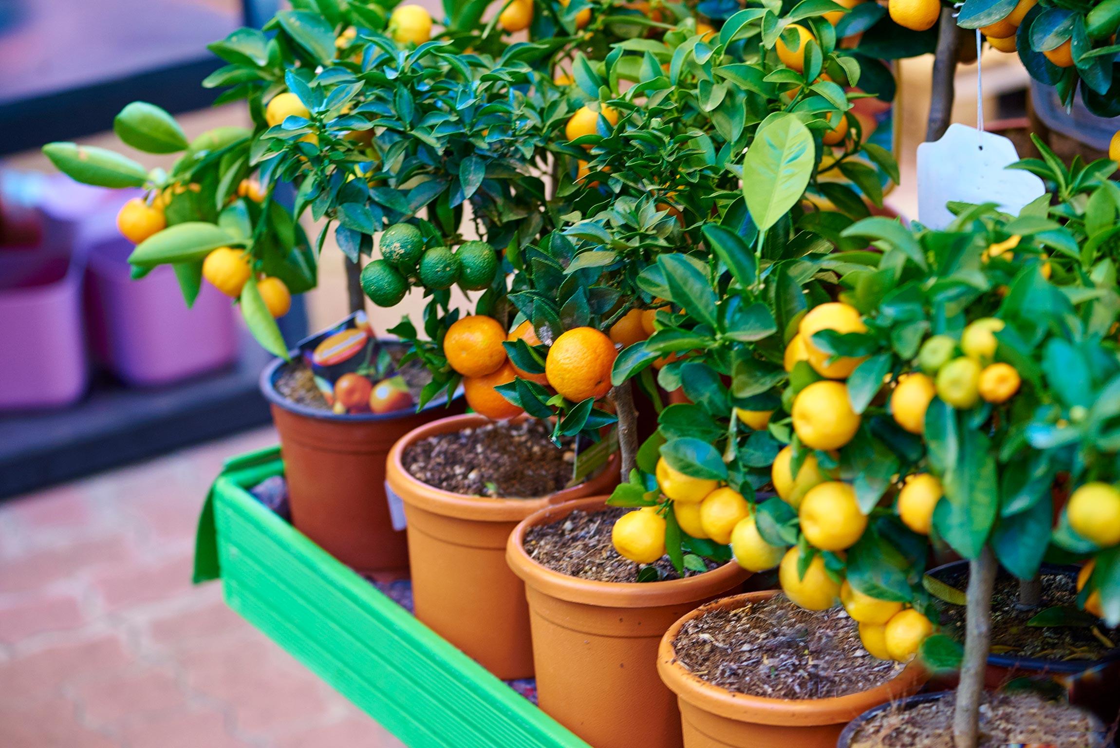 Edible Landscaping 15 Organizations Creating Edible