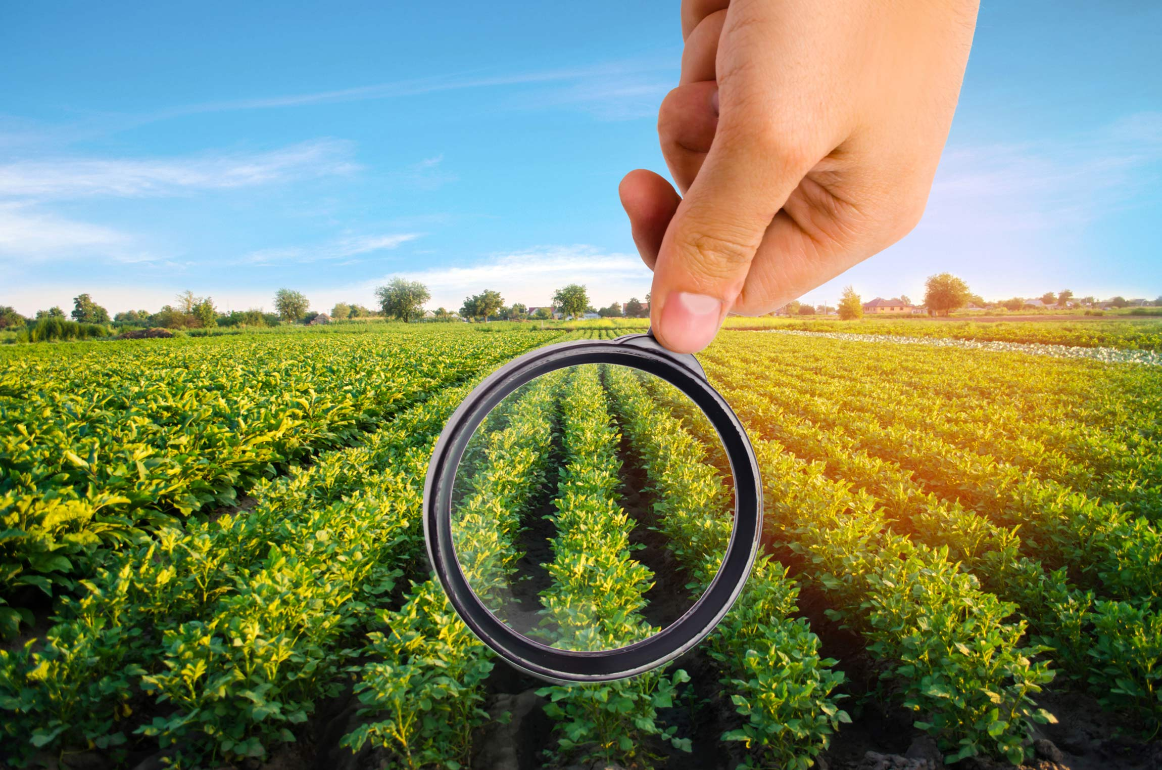 Magnifying glass over crops