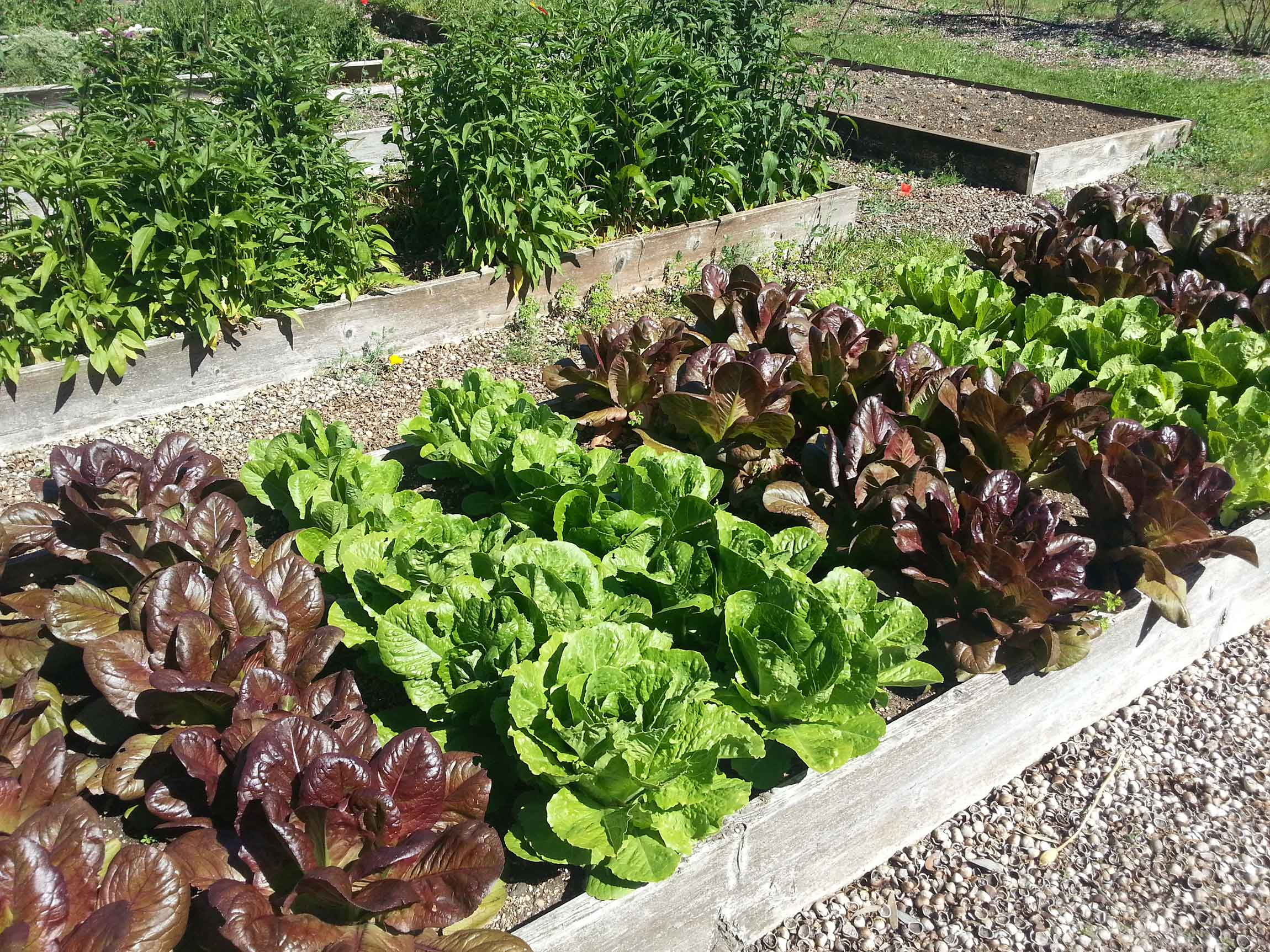 How to eat healthy on a budget: Grow your own greens