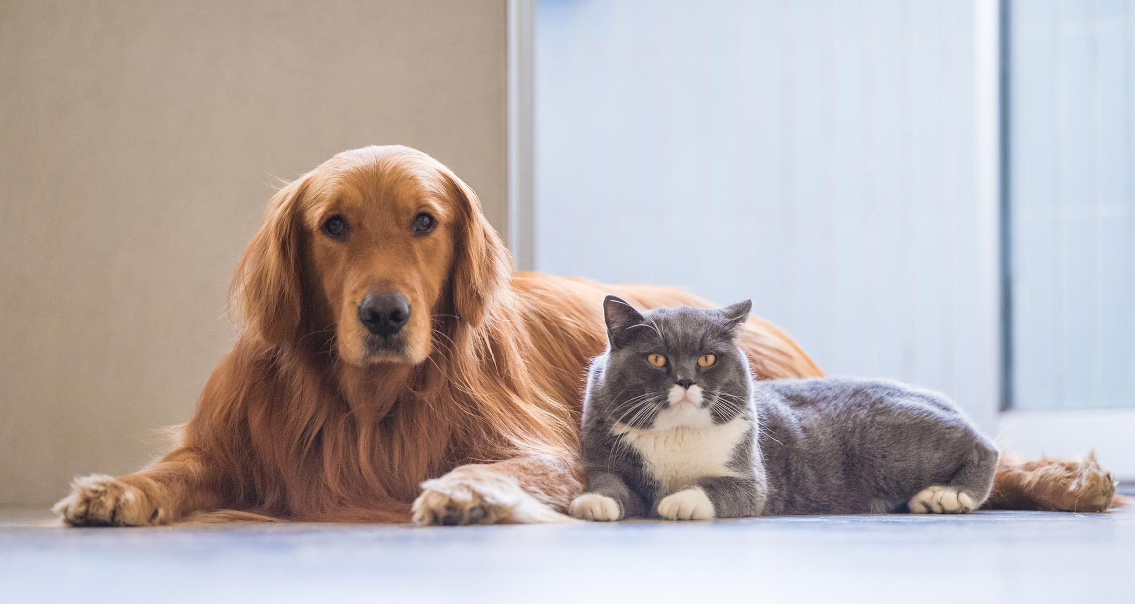 Is It Wrong to Have A Pet? What Should You Feed Dogs and Cats for Their Health and The Planet?