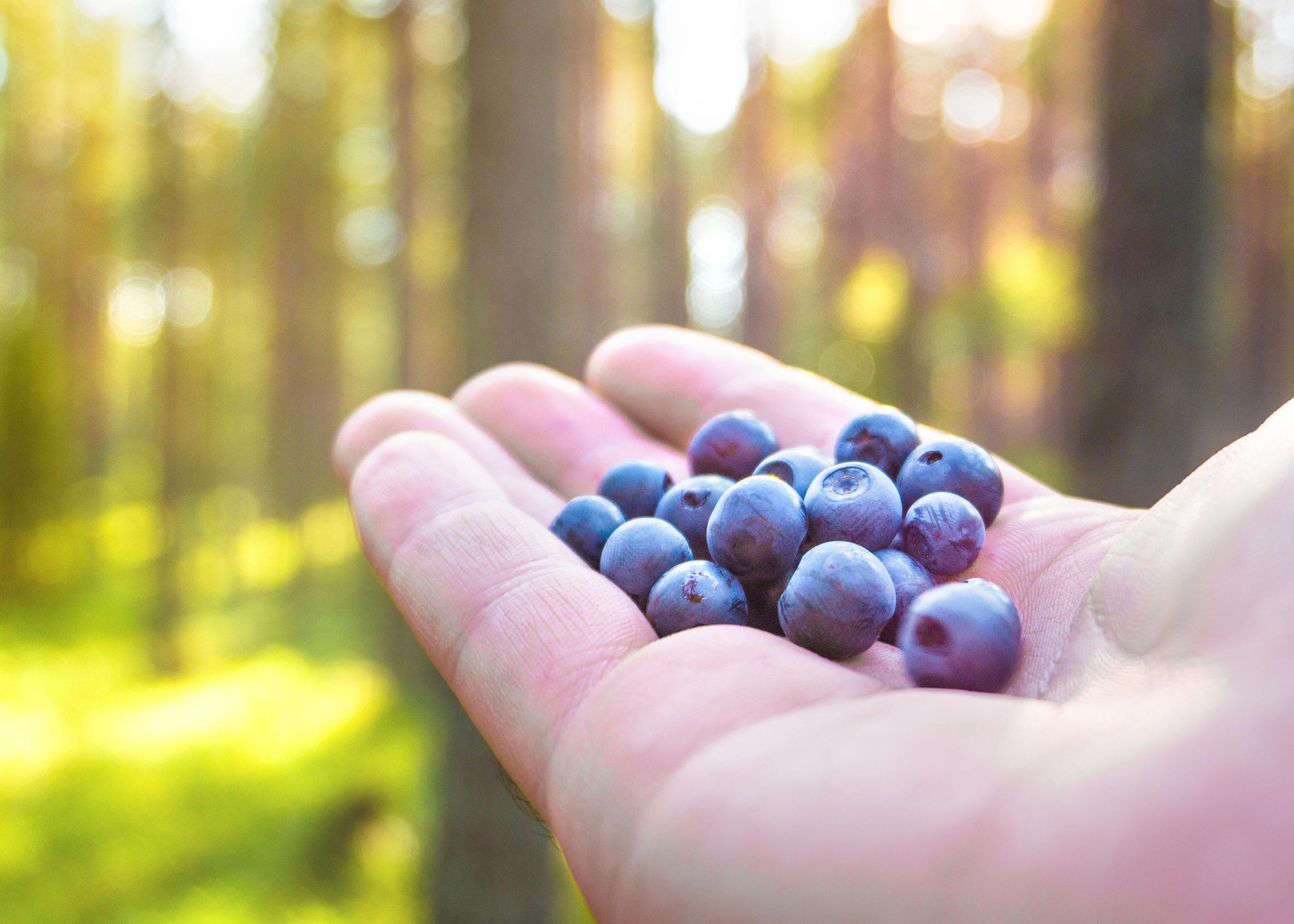 hand holding blueberries