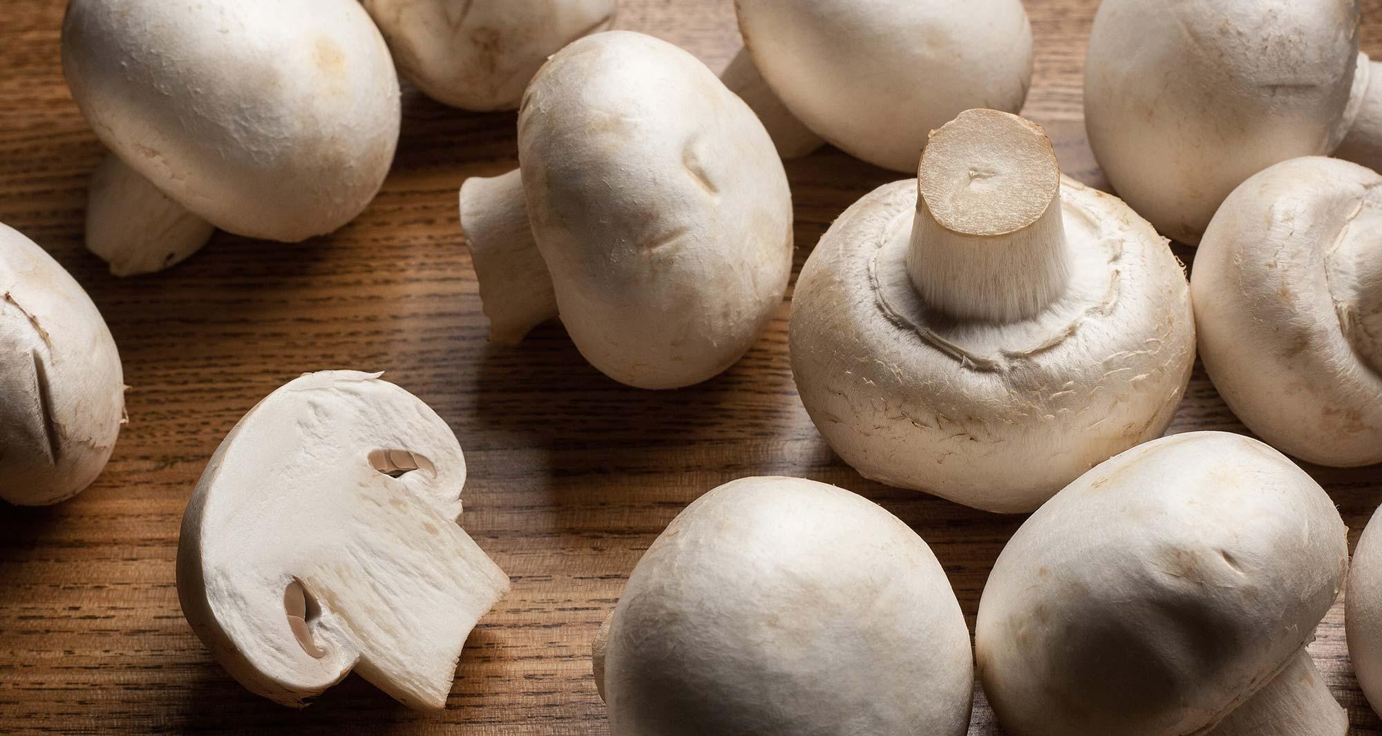 Image result for mushroom