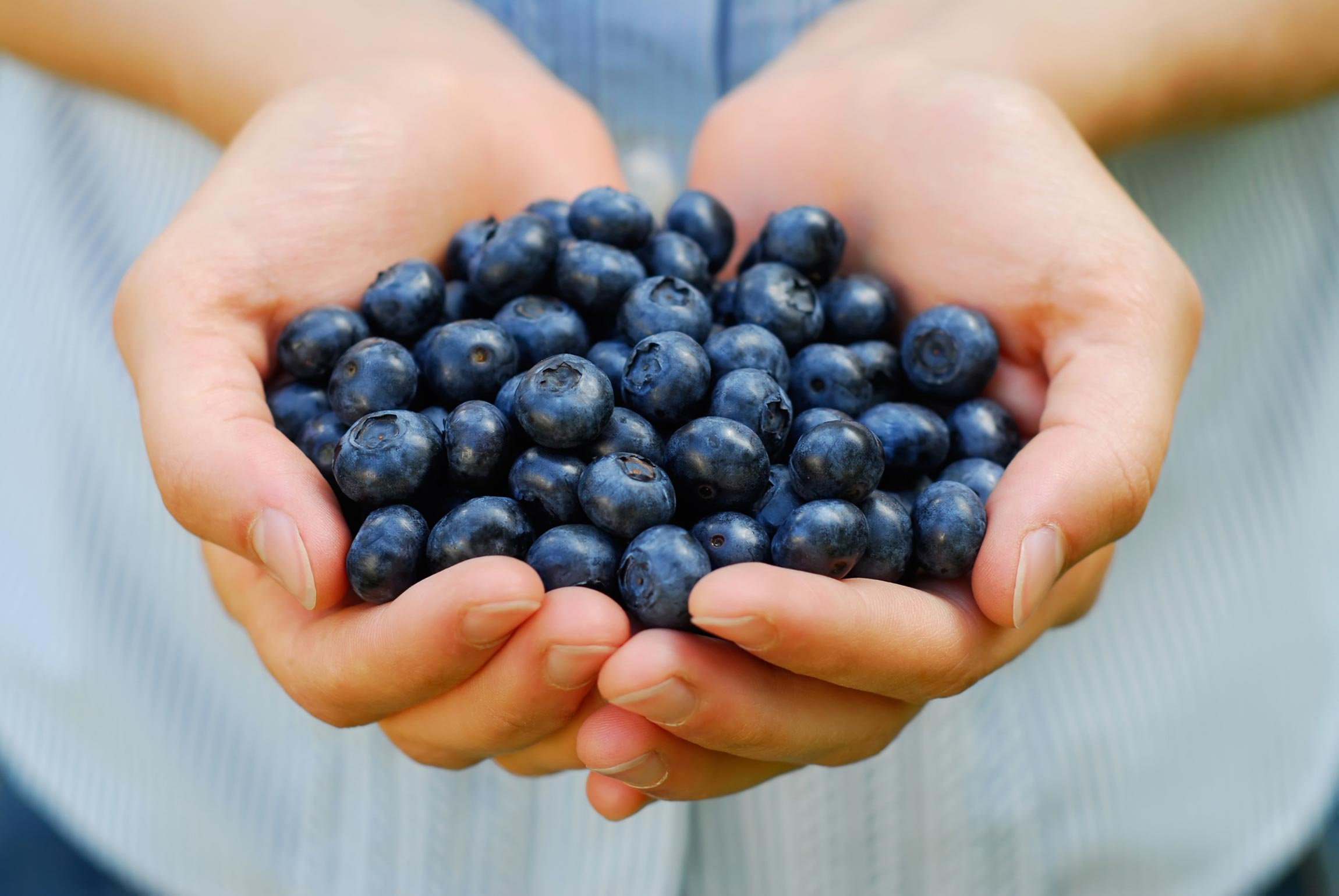 closeup of a hands holding blueberries