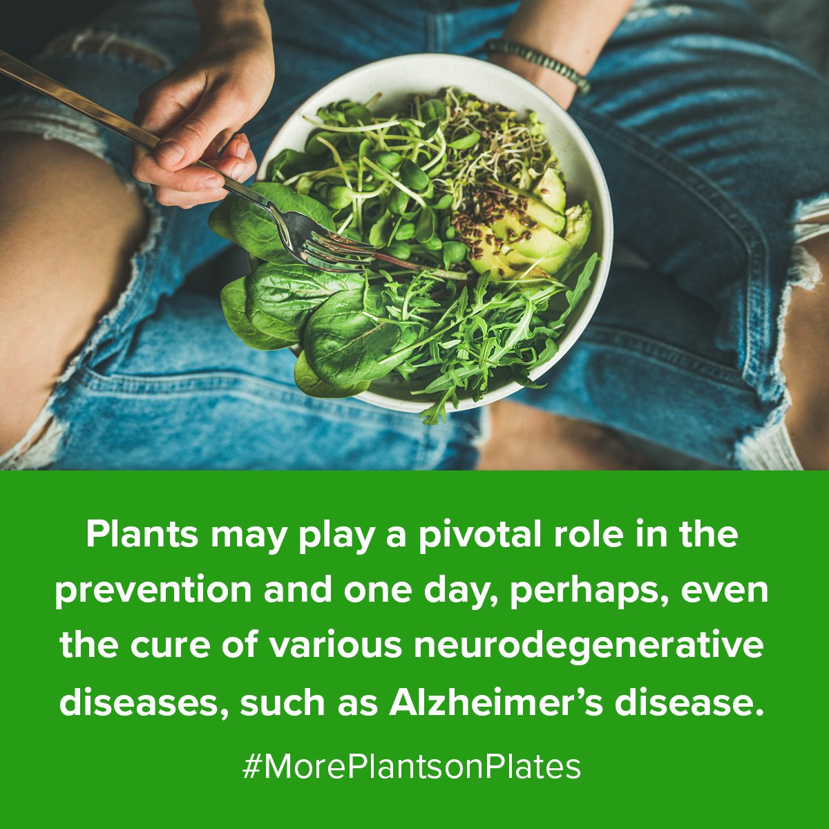 Plants may play a pivotal role in the prevention and one day, perhaps, even the cure of various neurodegenerative diseases, such as Alzheimer's disease. #MorePlantsonPlates