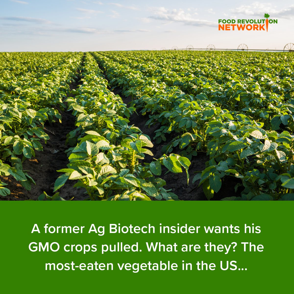 A former Ag Biotech insider wants his GMO crops pulled. What are they? The most-eaten vegetable in the US...