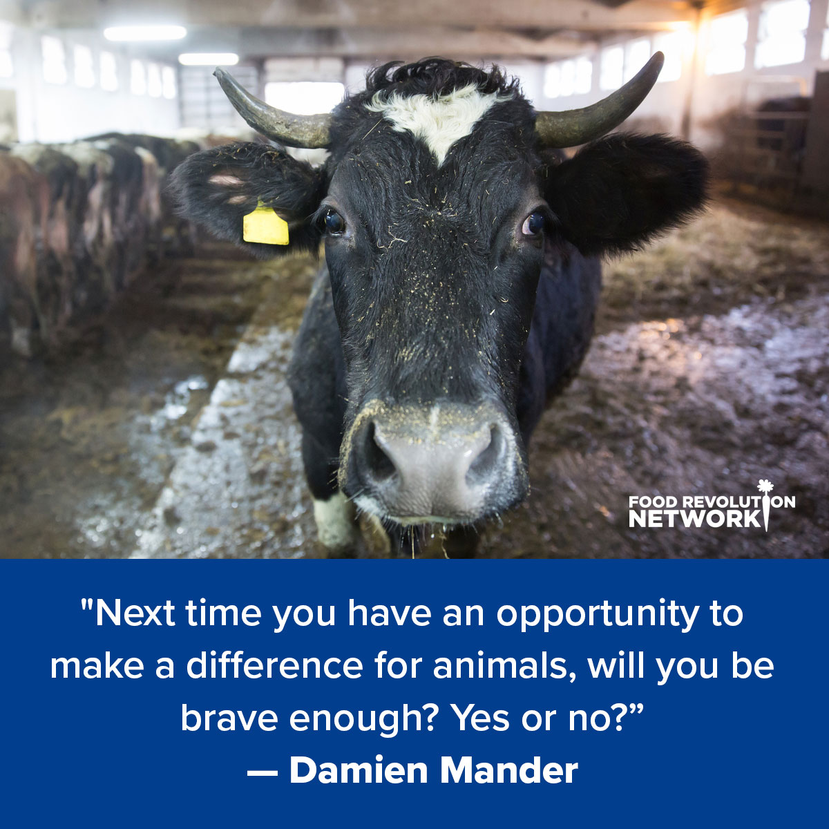 """Next time you have an opportunity to make a difference for animals, will you be brave enough? Yes or no?"" — Damien Mander"