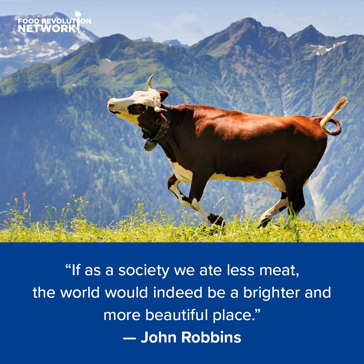 If as a society we ate less meat, the world would indeed be a brighter and more beautiful place. — John Robbins