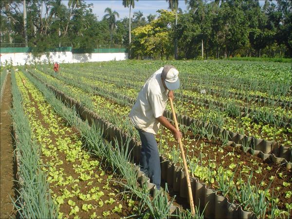 Man working in urban farm