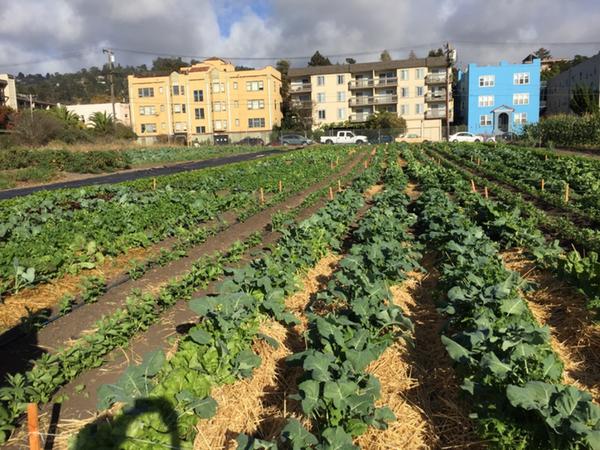urban farm plot