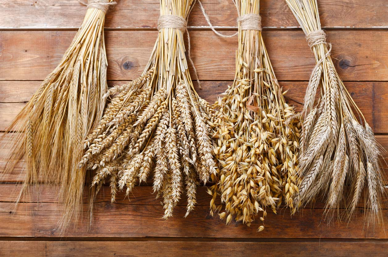 Variety of wheat barley and oats on wooden background