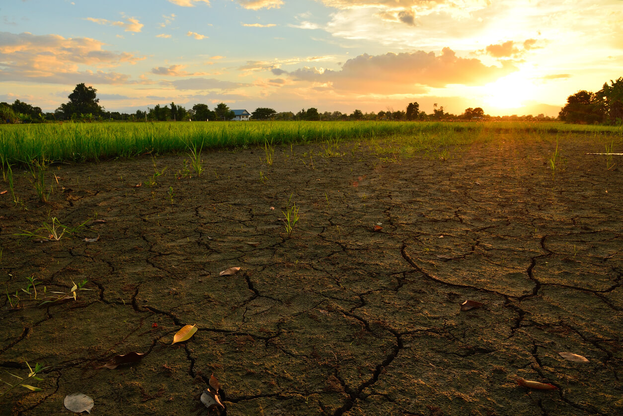 crack and dry ground at rice field with sunlight