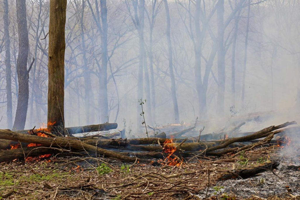 Controlled burns in an oak forest