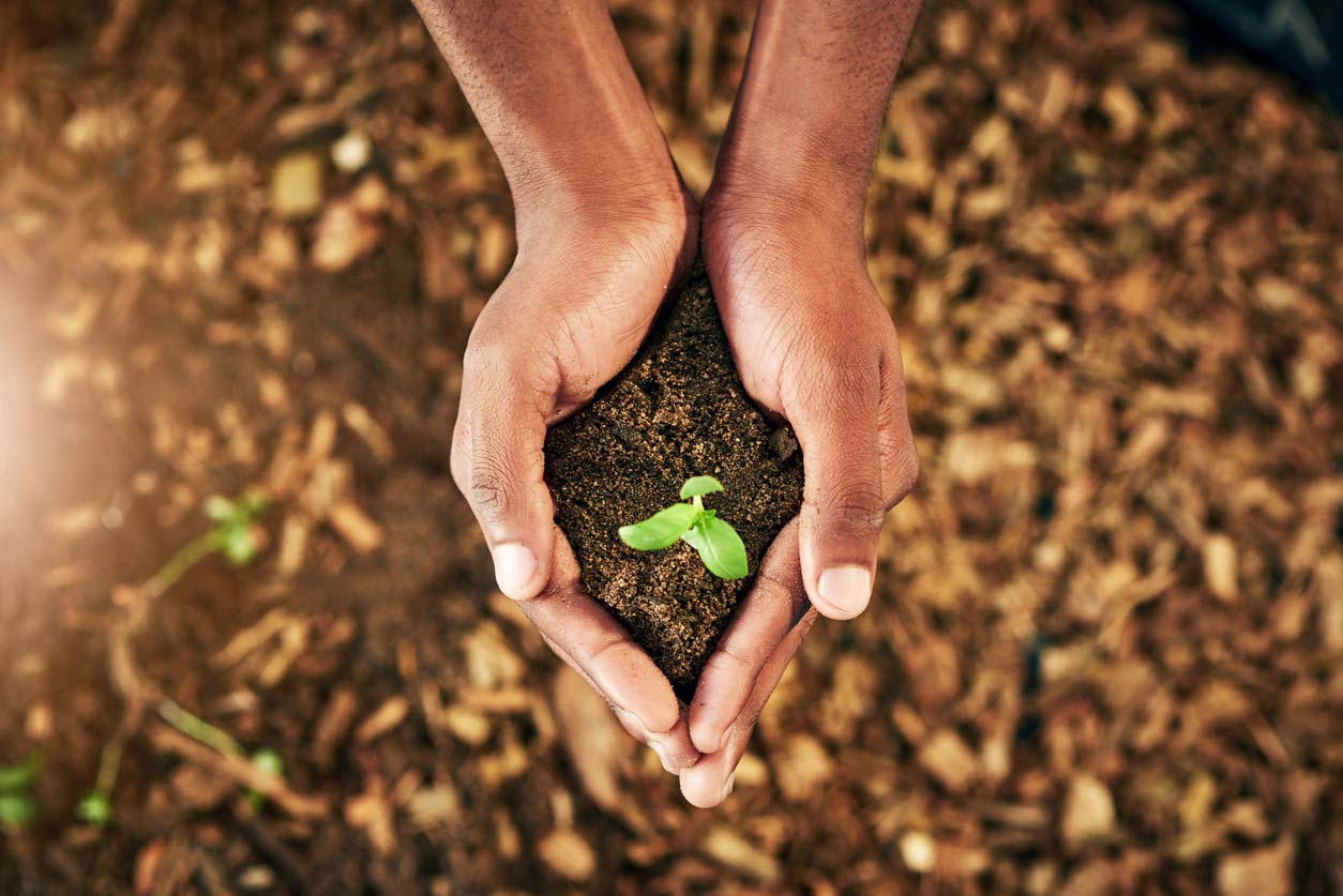 hands holding sapling in dirt