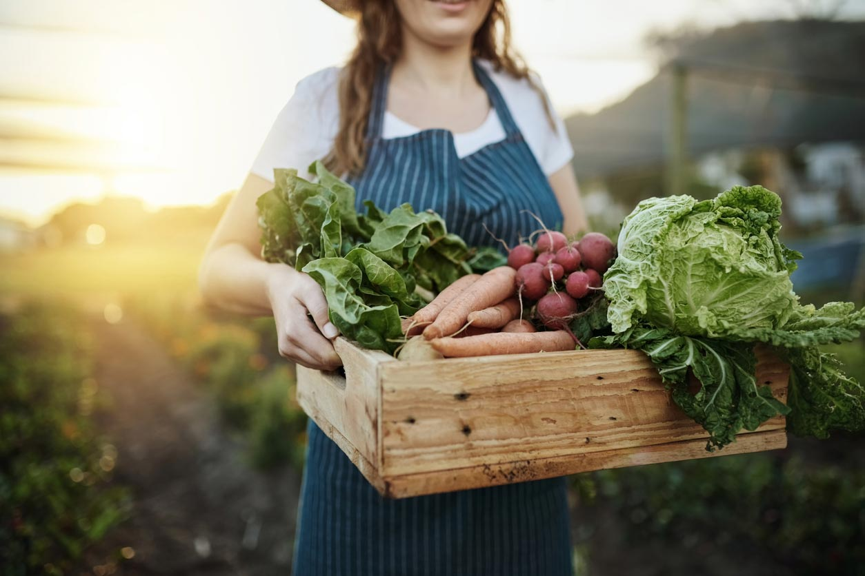 woman carrying vegetable harvest box