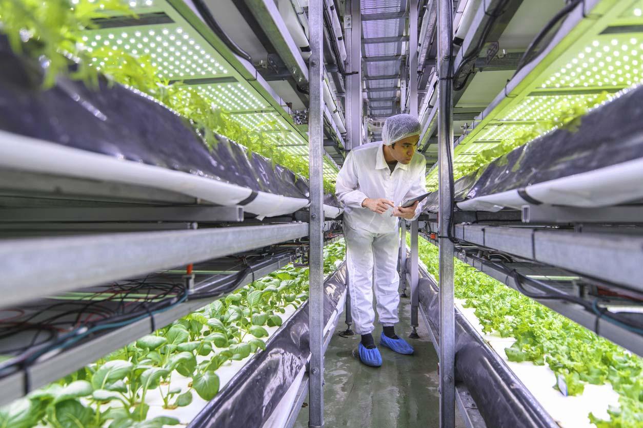 specialist inspecting hydroponic indoor garden