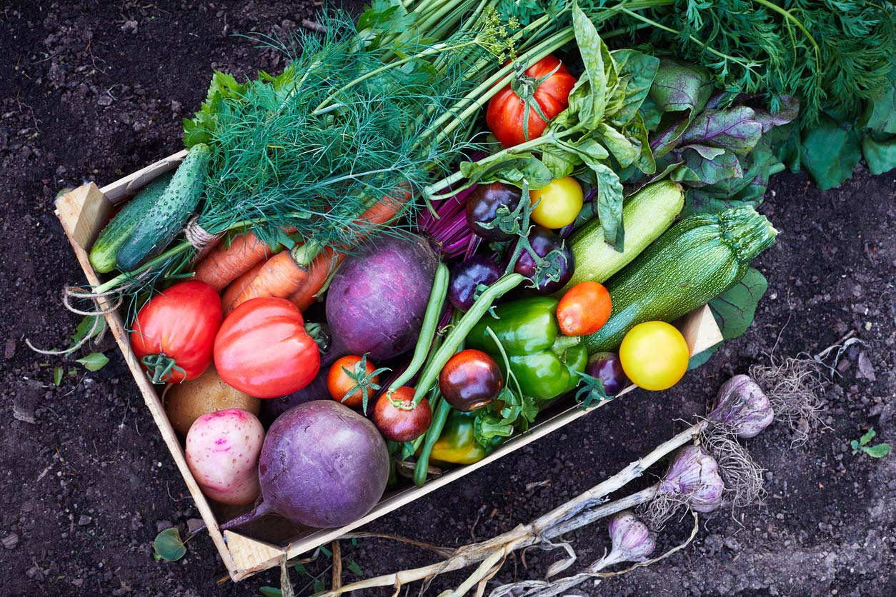 Organic vegetables in a box