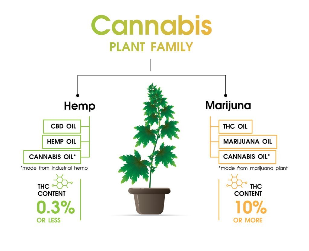 Cannabis family - hemp and marijuana
