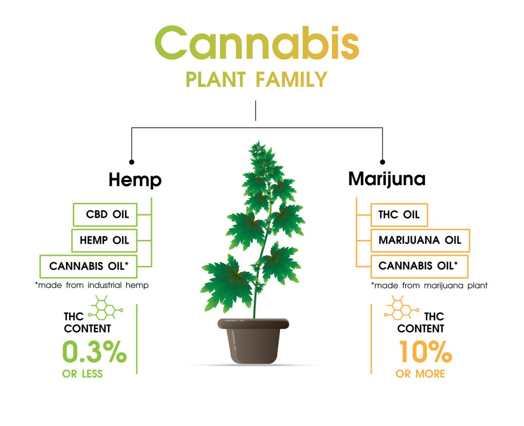 Cannabis family - hemp and marijuana