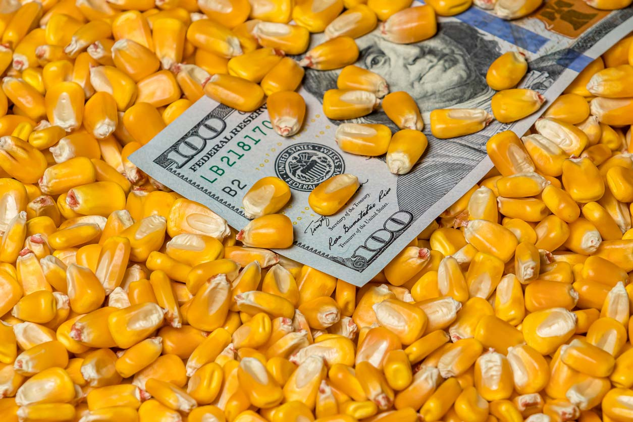 corn kernels covering $100 bill