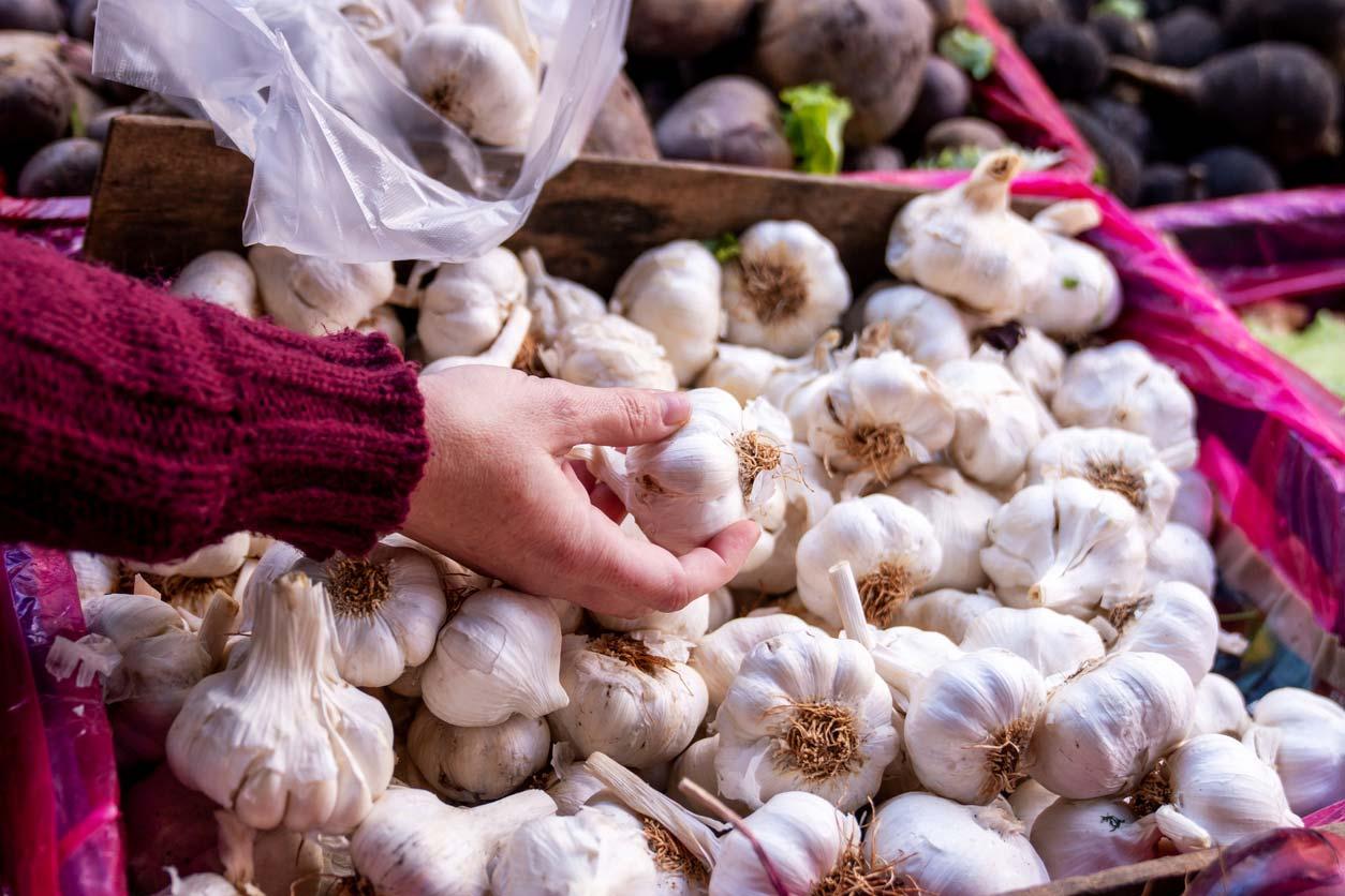 Selecting garlic bulbs at a market