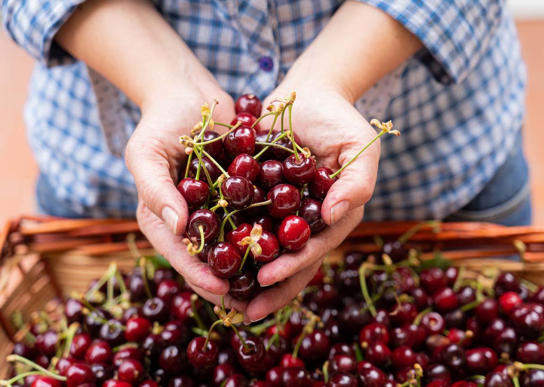 hands holding cherries