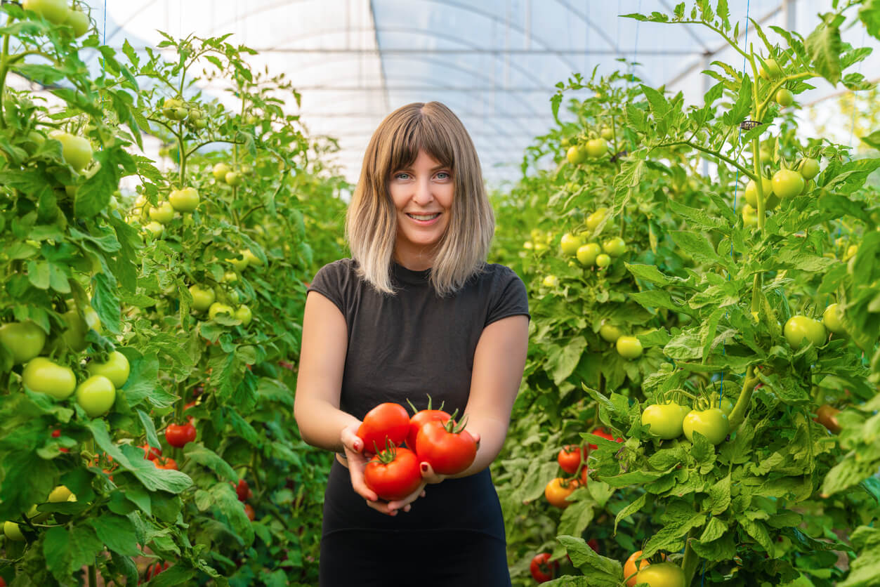 woman collects tomatoes in greenhouse