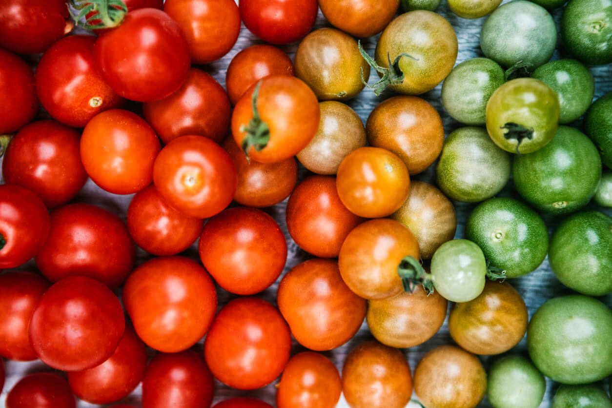 tomatoes arranged from ripe to unripe color gradient